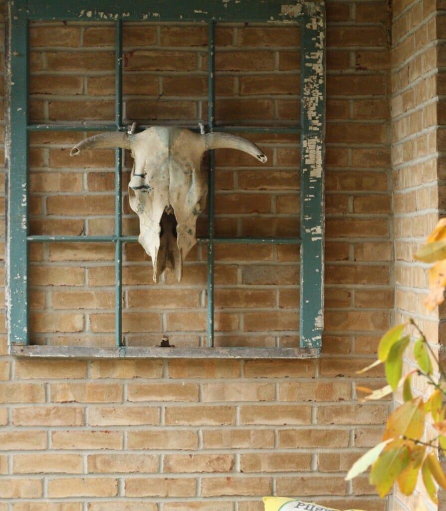 bull skull as outdoor decor