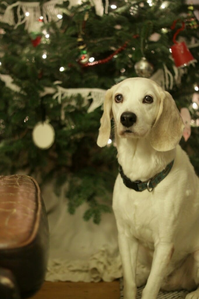 Jake in front of the tree