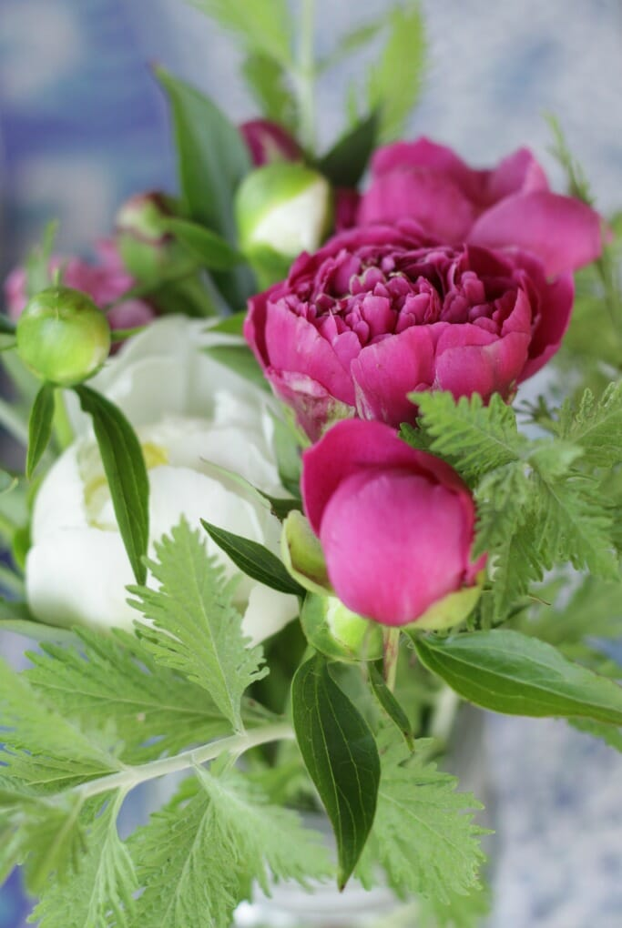 Peonies with Russian Sage