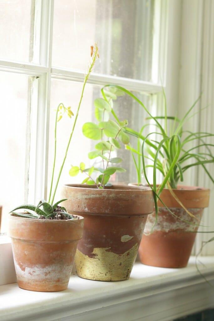 Weathered Terra Cotta Pots & Gold Leaf Pot in window sill