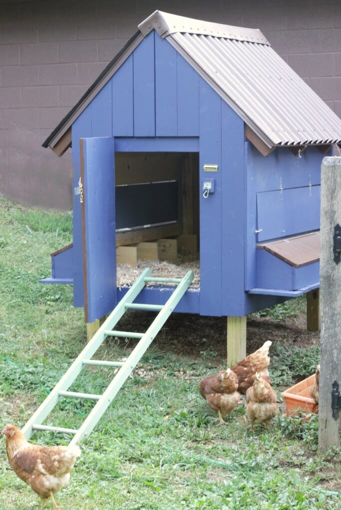 Hens at Blue Coop